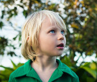 Child looking with wonder in nature. Cute child exploring the forest looking with wonder at nature stock photo