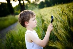 Child looks at the grain through a magnifying glass Stock Photos