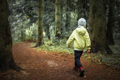 Child Lost In Forest. Little Boy Walks In Green Forest. Hiking. Children In Outdoor In Woodland. Lonely Boy In Forest. Stock Photos