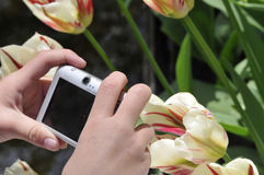 Child making photo of tulips. Spring landscape Stock Photography