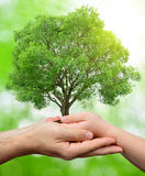 Child and male hands holding a tree Royalty Free Stock Photos