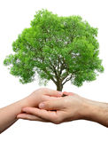 Child and male hands holding a tree Stock Photography