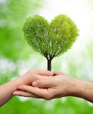 Child and male hands holding a tree in the shape of heart Royalty Free Stock Photo