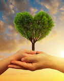 Child and male hands holding a tree in the shape of heart Royalty Free Stock Photography