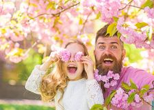 Child and man with tender pink flowers in beard. Father and daughter on happy face play with flowers as glasses, sakura. Child and men with tender pink flowers stock photography