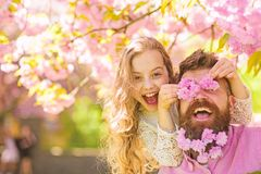 Child and man with tender pink flowers in beard. Girl with dad near sakura flowers on spring day. Father and daughter on. Child and men with tender pink flowers stock images
