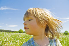 Child in the meadow stock photography