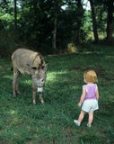 Child meets burro. Small Child has first meeting with shy Burro Royalty Free Stock Photo