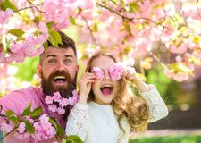 Child and man with tender pink flowers in beard. Father and daughter on happy face play with flowers as glasses, sakura. Child and men with tender pink flowers stock photos
