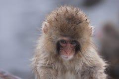 Child monkey Royalty Free Stock Images