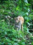 Child of monkeys Royalty Free Stock Photos