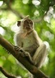 Child of monkeys Stock Photos
