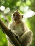 Child of monkeys Royalty Free Stock Image