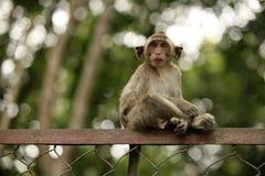 Child of monkeys Stock Image