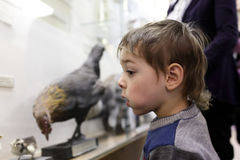 Child in museum Stock Photography