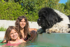 Child and newfoundland dog in swimming pool stock images