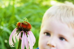 Child observes a grasshopper on a flower Royalty Free Stock Images