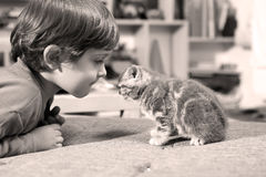 Child with one cute kitten Royalty Free Stock Photos