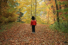 Child outdoor in forest Stock Images