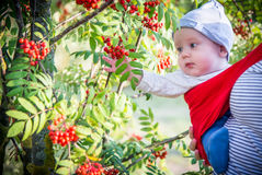 Child outdoors near rowan tree Royalty Free Stock Photo