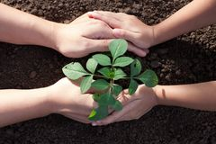 Child and parent hand planting young tree on black soil together. As save world concept Stock Photos