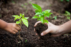 Child and parent hand planting young tree on black soil together Royalty Free Stock Images