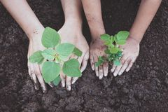 Child and parent hand planting young tree on black soil together. As save world concept Stock Image