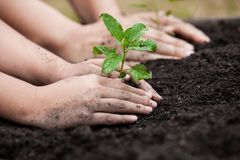 Child and parent hand planting young tree on black soil together Royalty Free Stock Image