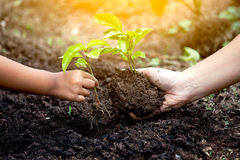 Child and parent hand planting young tree on black soil together. As save world concept in vintage color tone Stock Photography