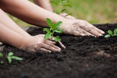 Child and parent hand planting young tree on black soil together Stock Images