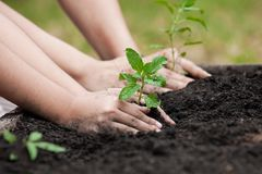 Child and parent hand planting young tree on black soil together Stock Photo
