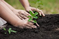 Child and parent hand planting young tree on black soil together. As save world concept Stock Images