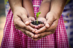 Child with parents hand holding young tree in egg shell together Royalty Free Stock Images