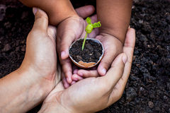 Child with parents hand holding young tree in egg shell together. For prepare plant on ground,save world concept Royalty Free Stock Photography
