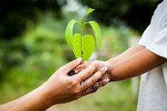 Child with parents hand holding young tree in soil together. For prepare plant on ground,save world concept Stock Photo