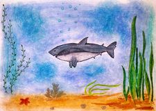 Child pencil hand drawing. Shark in the sea. Stock Photos