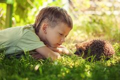 Child with pet. Boy and hedgehog looking at each other Stock Photo