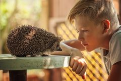 Child with pet. Boy and hedgehog looking at each other Royalty Free Stock Photography