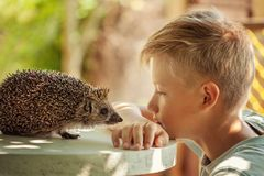 Child with pet. Boy and hedgehog looking at each other Royalty Free Stock Photo