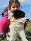 Child with a pet puppy dog Stock Image