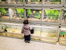 Child in pet shop Stock Images