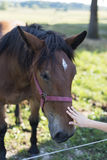 Child petting a farm horse Stock Image