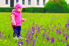 Child pick purple flowers baby girl Stock Images