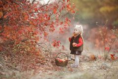 Cute little girl with a basket of red apples in the fall in the park royalty free stock image