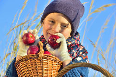 Child picking apples on a farm in autumn. Royalty Free Stock Photo