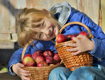 Child picking apples on a farm in autumn. Stock Image