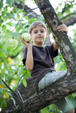 Child picking apples in a tree Royalty Free Stock Photography