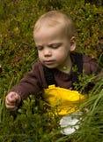 Child picking bilberries. Sweet little toddler picking wild bilberries stock photos