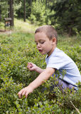 Child picking blueberries Stock Image