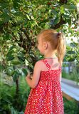 Child picking cherries Stock Images